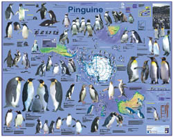 Aldi-Poster Pinguine