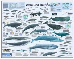 Aldi-Poster Wale und Delfine