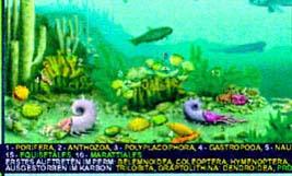 Permian sea life