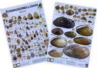 Handkarte Süsswassermollusken