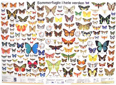 Sommerfugle i hele verden
