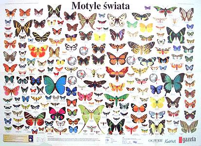 Motyle swiata (Polish poster)