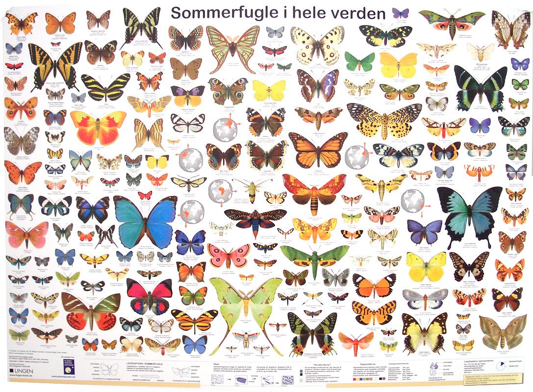 Sommerfugle i hele verden (Danish poster)