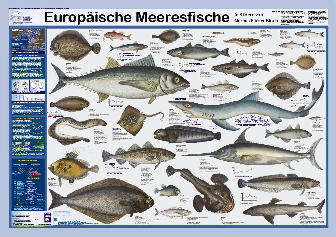 "Poster ""Europäische Meeresfische"""