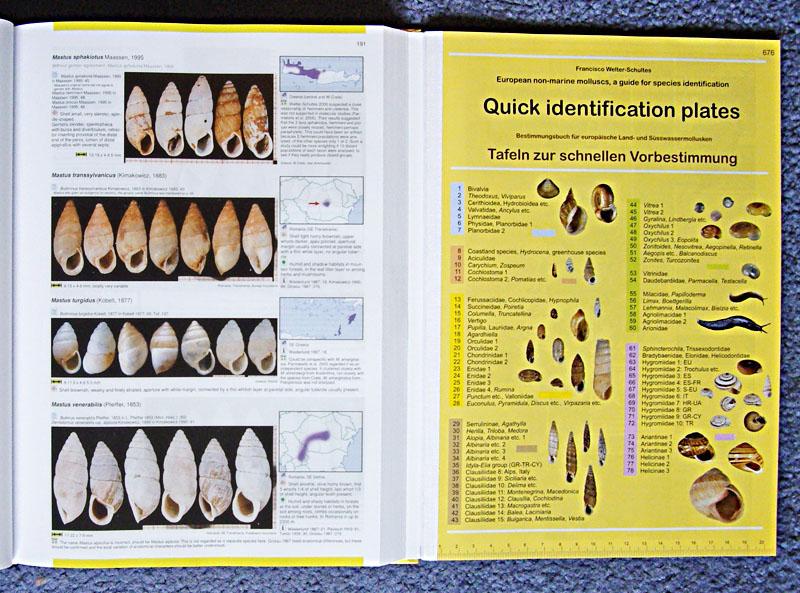 European non-marine molluscs book