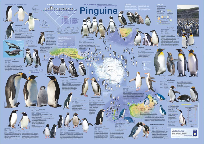 "Poster ""Pinguine"""