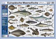 Eur. Meeresfische