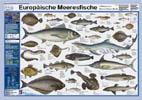 Poster Meeresfische