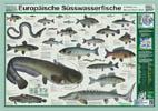 Poster Europäische Süsswasserfische