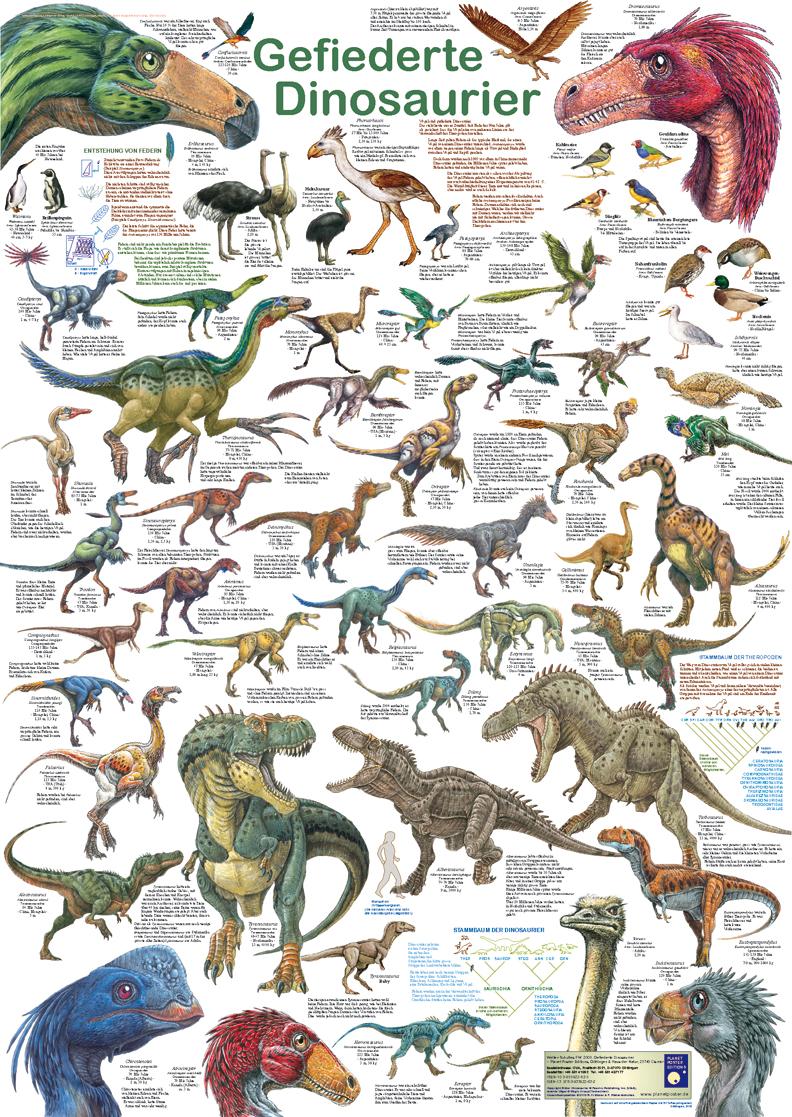 Poster: Gefiederte Dinosaurier