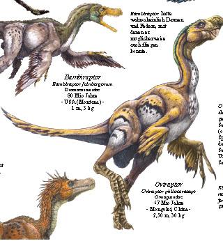 Oviraptor, Bambiraptor und Unenlagia
