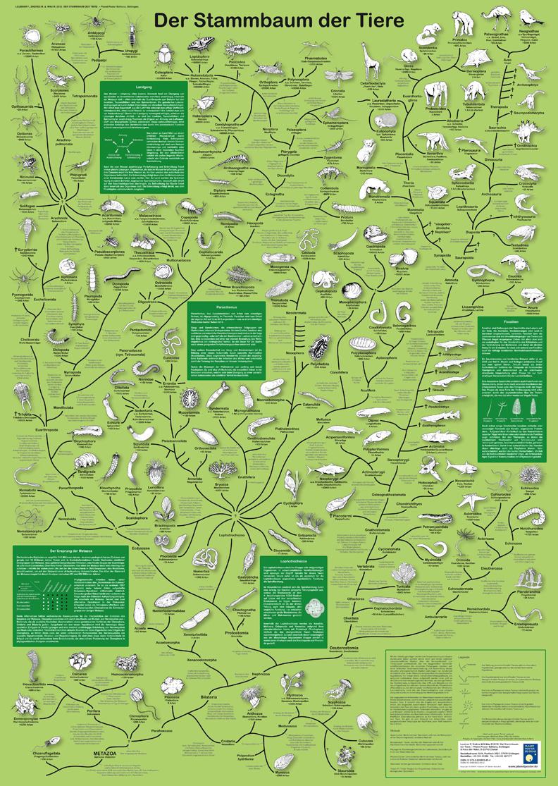 """Poster """"Der Stammbaum der Tiere"""""""