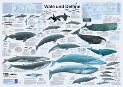 Poster Wale und Delfine