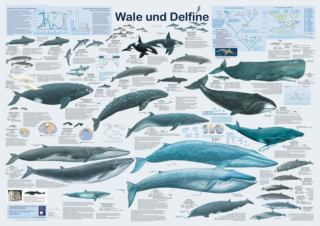 wal und delfin